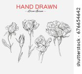 set of hand drawn roses. vector | Shutterstock .eps vector #676654642