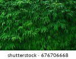 bamboo leaves background. | Shutterstock . vector #676706668