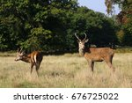 red deer in richmond park ... | Shutterstock . vector #676725022