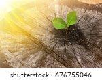 rebirth of the dead tree stump | Shutterstock . vector #676755046