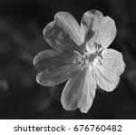 flower close up b w           ...