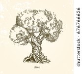 olive tree. vintage style....   Shutterstock .eps vector #676766626