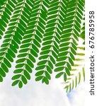 green leaf | Shutterstock . vector #676785958