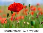 green and red beautiful poppy... | Shutterstock . vector #676791982