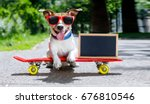 jack russell terrier dog ... | Shutterstock . vector #676810546