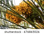 Dense Bunches Of Yellow And...