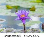 Summer Flowers Series  Water...