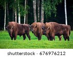 three huge bisons grazing on... | Shutterstock . vector #676976212