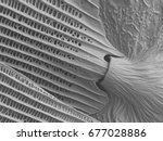 butterfly wing scanning... | Shutterstock . vector #677028886