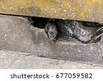 A Rat Come Out From Under The...
