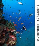 color fishes in the red sea     ... | Shutterstock . vector #677230846