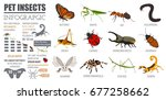 pet insects breeds icon set... | Shutterstock .eps vector #677258662