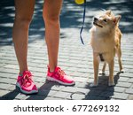 Stock photo big pomeranian spitz dog next to a girl in the street 677269132