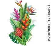 arrangement from tropical... | Shutterstock . vector #677352976