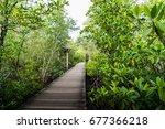 wood walkway in the mangrove...   Shutterstock . vector #677366218