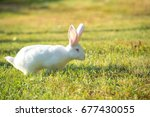 Lovely White Rabbit With Pink...
