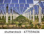 agriculture and photovoltaic... | Shutterstock . vector #677554636