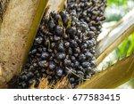 oil palm plantation in thailand   Shutterstock . vector #677583415