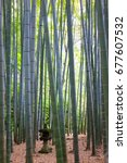 bamboo grove and stone lantern | Shutterstock . vector #677607532