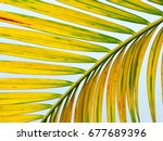 yellow palm leaf | Shutterstock . vector #677689396
