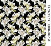 white flowers of lily  madonna... | Shutterstock .eps vector #677876758