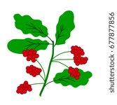 schisandra berries branch... | Shutterstock .eps vector #677877856