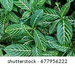 green leaf nature | Shutterstock . vector #677956222
