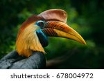 knobbed hornbill  rhyticeros... | Shutterstock . vector #678004972