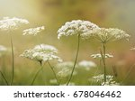 nature in summer  wild flowers...   Shutterstock . vector #678046462