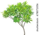 green fresh leaf isolated white ... | Shutterstock . vector #678071056