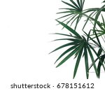 tropical leave background... | Shutterstock . vector #678151612