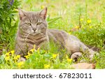 Blue Tabby Cat Surrounded By...