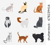 set of cat breeds color flat... | Shutterstock .eps vector #678239416