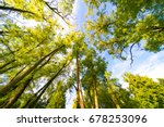 a view of the top through tree... | Shutterstock . vector #678253096