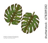 tropical leaves   philodendron. ... | Shutterstock .eps vector #678289282
