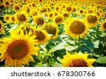 sunflower field | Shutterstock . vector #678300766