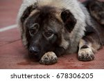 dog breed caucasian shepherd... | Shutterstock . vector #678306205