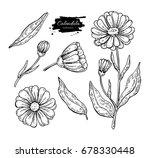calendula vector drawing.... | Shutterstock .eps vector #678330448