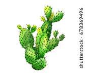 wildflower cactus flower in a... | Shutterstock . vector #678369496