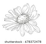hand drawn flower  chamomile... | Shutterstock .eps vector #678372478
