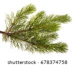 a branch of a pine tree.... | Shutterstock . vector #678374758