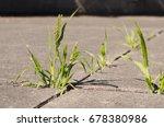 green weeds growing through...   Shutterstock . vector #678380986
