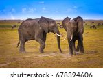 Small photo of Two elephants. African elephants. Nature Africa.