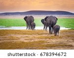 Family Of Elephants. Elephants...