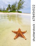 Starfish Under The Clear...