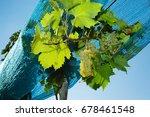 vineyard anti bird protection... | Shutterstock . vector #678461548