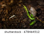 close up planting tree on... | Shutterstock . vector #678464512