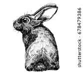 Stock vector hand drawn set for design website background banner ink cute hare sketch 678479386