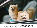 two cute pomeranian dogs... | Shutterstock . vector #678493522