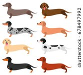 colorful dachshund set | Shutterstock .eps vector #678497992
